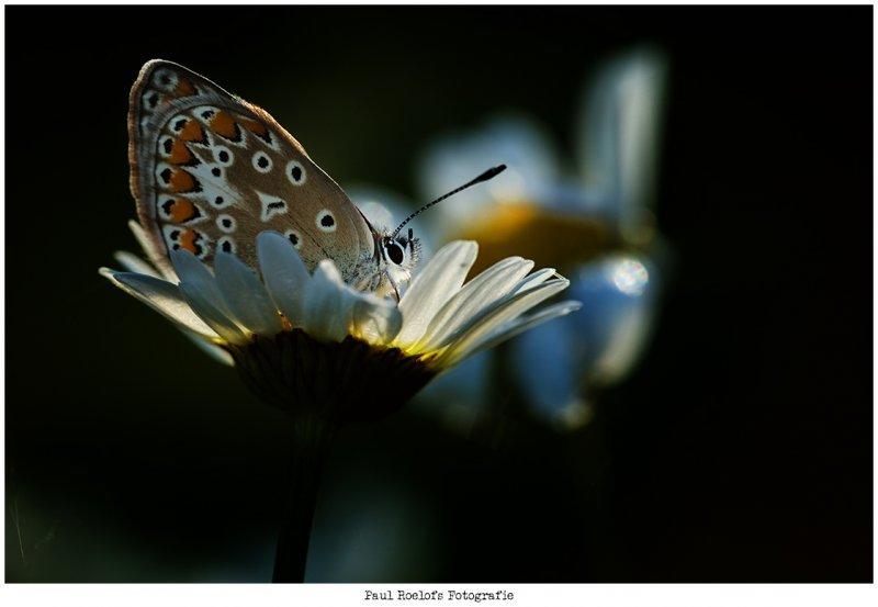 vlinder-img_9365