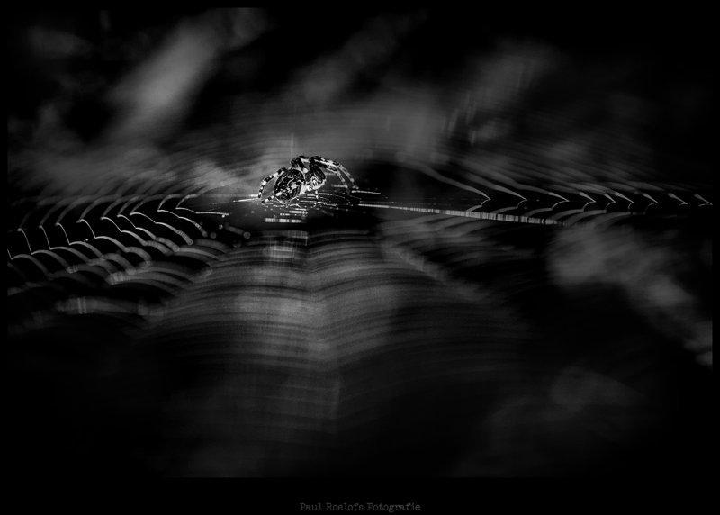 spider-img_1096